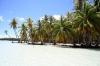 Palmen am Strand von Bora Bora