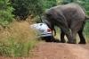 Elefant Amarula wirft Auto um (Pilanesberg) Südfrika