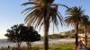 Palmen - Kapstadt (Südafrika)
