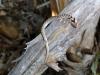 Schlange (Südafrika)