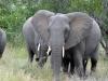 Elefant bei Safari im Krueger Nationalpark