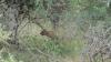 Leopard nach Jagd - Safari im Kruger Nationalpark