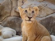 Fotos und Infos: Ein Tag im Lion Park Johannesburg