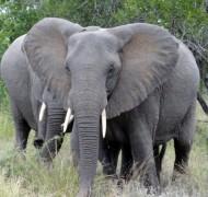 Reisebericht: Südafrika Rundreise