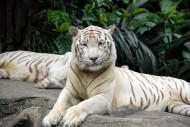 Singapur Zoo & Night Safari: Auf in die Tierwelt