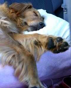 Vom Flugzeug bis zum Hotel: Viele Hürden beim Urlaub mit Hund