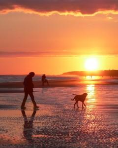Ab in den Süden: Urlaub mit Hund in Italien und Spanien