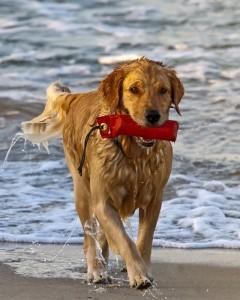 Urlaub mit Hund am Meer: Dänemark oder Ostsee und Nordsee in Deutschland