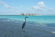 Gili Lankanfushi – Luxus Malediven Urlaub in Perfektion