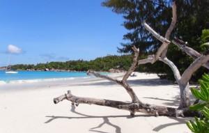 Noch ein CONDOR Ziel: die paradiesischen Seychellen