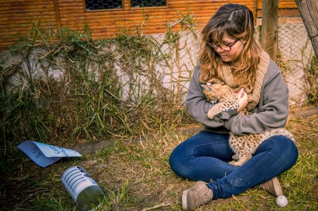 Freiwilligenarbeit mit Tieren in Afrika: Große Abenteuer mit Travel To Grow